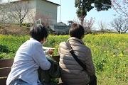 高山・佐藤カツ子様背中越しの菜の花